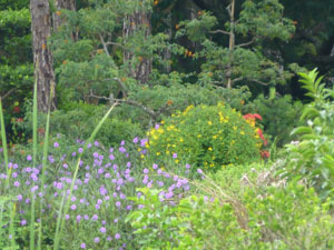 flowerfield1.jpg